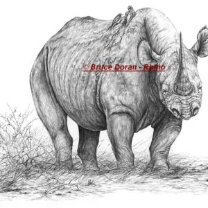 rhino drawing print on canvas - 51cm wide - by Bruce Doran